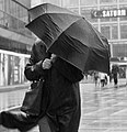 Rain (66467207).jpeg