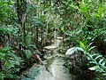 Rainforest Creek - Fraser Island.jpg