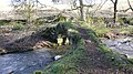 Rais Beck Packhorse Bridge - panoramio.jpg