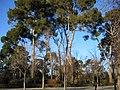 Real Parque del Buen Retiro (2806563103).jpg