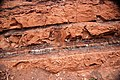 Redbeds (Chugwater Formation, Upper Triassic; south of Thermopolis, Wyoming, USA) 10.jpg