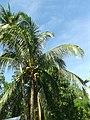 Renzo Village - panoramio (19).jpg