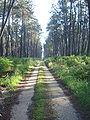 Retjons (Landes, Fr), chemin en forêt.JPG