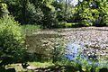 Rhododendronpark Bremen 20090513 001.JPG