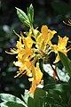 Rhododendronpark Bremen 20090513 061.JPG