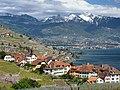 Rivaz - Alpes.jpg