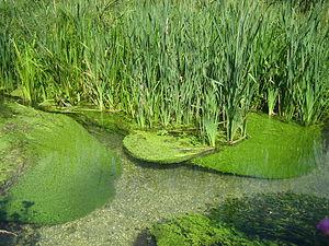 Itchen Stoke and Ovington - Image: River Itchen Ovington (riverbed)