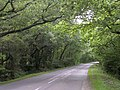 Road on the edge of Ashen Wood, Beaulieu, New Forest - geograph.org.uk - 36641.jpg