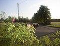 Rose Bushed - geograph.org.uk - 50493.jpg