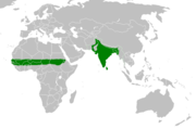 Equatorial Africa, India, Pakistan, Bangladesh, Nepal, and Burma