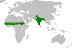 Native range of rose-ringed parakeet