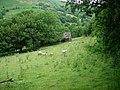 Rough grazing - geograph.org.uk - 203974.jpg