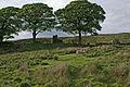 Ruins of Drinkwaters Farm - geograph.org.uk - 475624.jpg