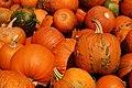 SK Sky Meadows Pumpkins (5137271000).jpg