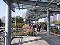SZ 深圳灣口岸 Shenzhen Bay Port bus terminus to footbridge January 2020 SSG 10.jpg