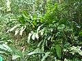 Sankt Lucia - panoramio - georama (29).jpg