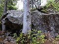 Sasso con magnesite tra gli alberi del bosco - Foppiano di Crodo (Verbano-Cusio-Ossola) - 2017-04-24.jpg