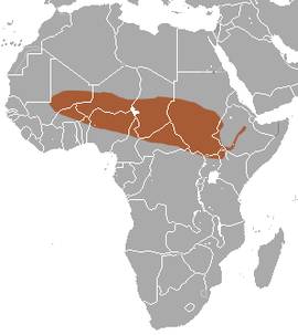 Savanna Shrew area.png