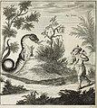 Scheuchzer(1723)-vol2-p390a-draco-fig-viii.jpg
