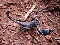 Scorpion (3).jpg