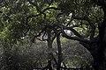 Seasonal Swamp Forest ,National Botanical Garden of Bangladesh Pic 1.jpg