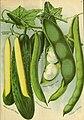 Seed annual 1903 (1903) (14784839135).jpg
