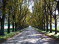 Senlis (60), allée vers l'abbaye de la Victoire.jpg