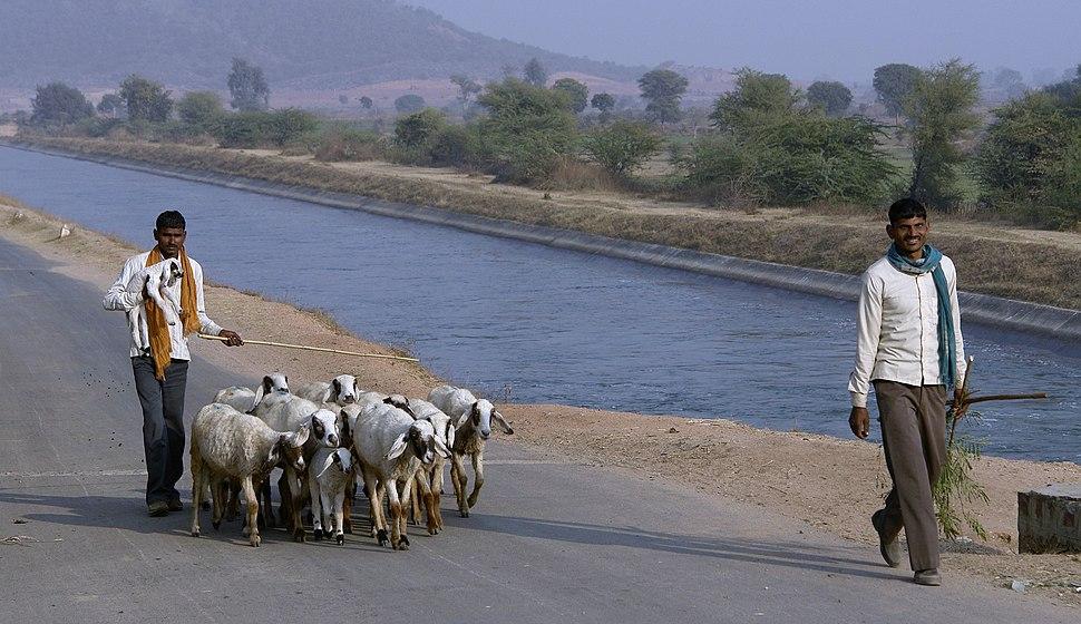 Shepherds, Chambal, India