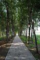 Shunyi, Beijing, China - panoramio - jetsun (9).jpg