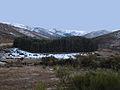 """Sierra de Gredos * Corralito de pinos """" Bancal """".jpg"""