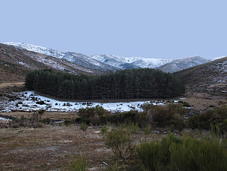 San Juan de Gredos - Isolate forest of scotch pine in the northern slopes of Sierra de Gredos
