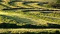 Silage Field near Kenmure - geograph.org.uk - 536417.jpg