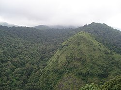 Silent Valley National Park greenary.jpg