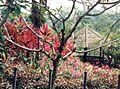 Singapore gardens.jpg