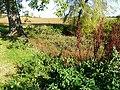 Small pond on Cauldham Lane - geograph.org.uk - 1562009.jpg