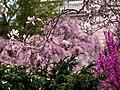 Smithsonian Gardens in April (17612521422).jpg