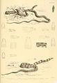 Snakes by Albert Gunther (5).jpg
