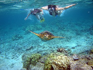 Big Island Snorkeling Fish