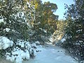 Snow in the mountains of the city Batna 59.jpg