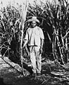 South Sea Islander labourer in the sugar cane fields at Bingera (3212296982).jpg