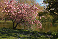 Spring in London (7173035080).jpg