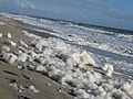 Spume on beach 3.JPG