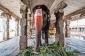 Sri Virupaksha Temple elephant Hampi.jpg
