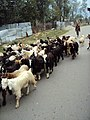 Srinagar - Sonamarg views 02.JPG