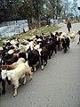 Srinagar - Sonamarg views 02.JPG