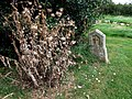 St Leonard's churchyard, Kirkstead - geograph.org.uk - 556665.jpg