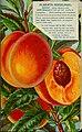 Stark fruits (1896) (20544598315).jpg