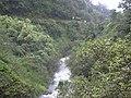 Starr-031210-0017-Aleurites moluccana-view rushing stream-Hana Hwy-Maui (24583424591).jpg