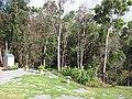 Starr-090707-2385-Zea mays-home garden-Olinda-Maui (24342173373).jpg