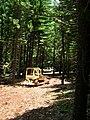Starr 050515-1163 Araucaria columnaris.jpg